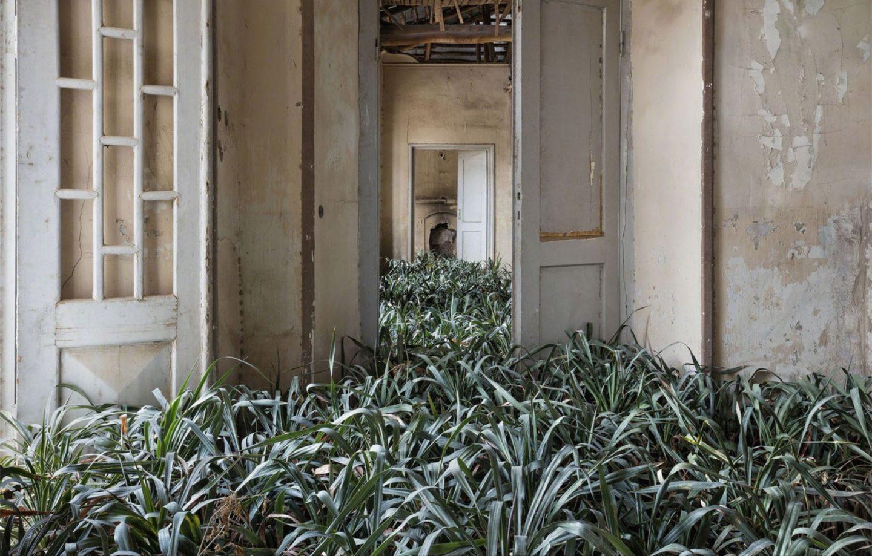 cômodo tomado por plantas