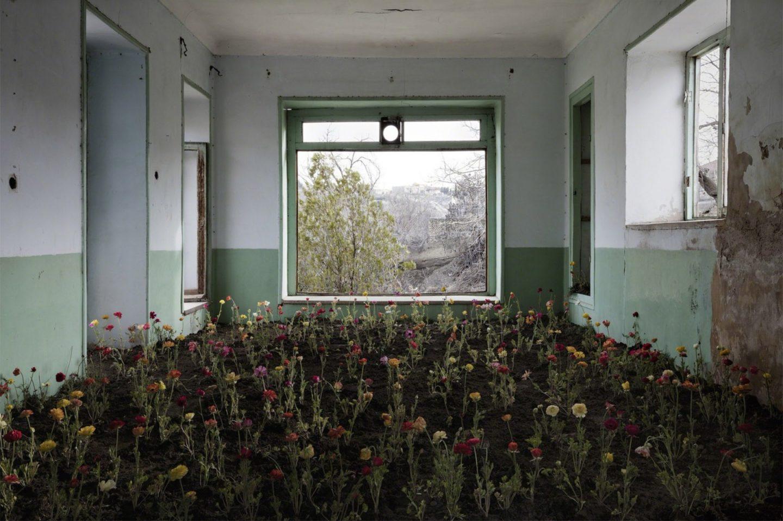 sala com diversas plantas