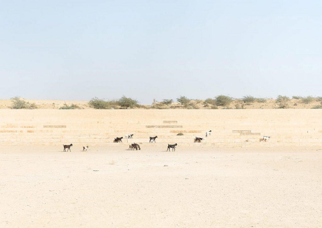 animais no oriente médio