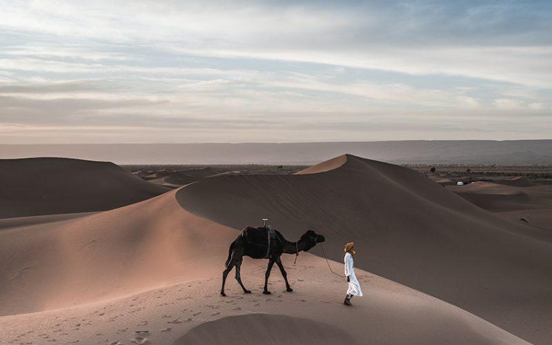 Empresas Unicornio poderiam ser camelos.